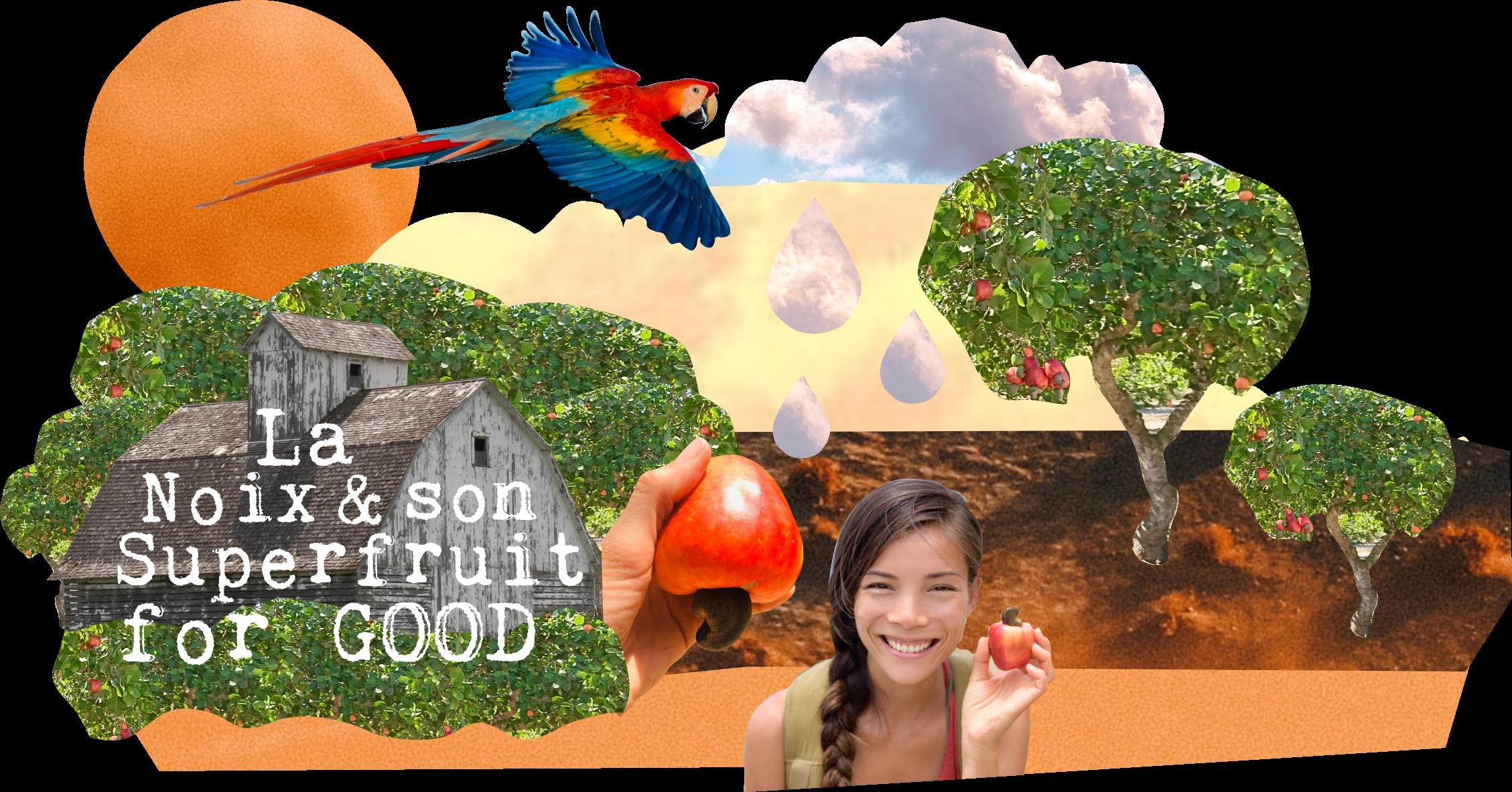 Cajou Lovers : la noix et son superfruit for good